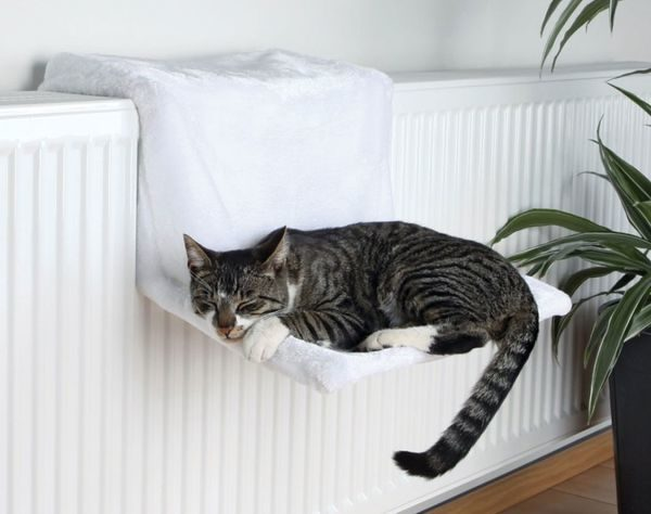 10 полезных советов для тех у кого дома кошка