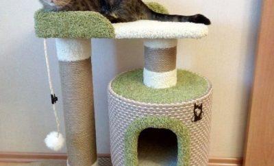 полезные советы для тех у кого дома кошка