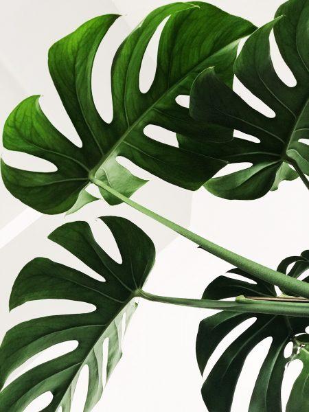 Польза искусственных растений